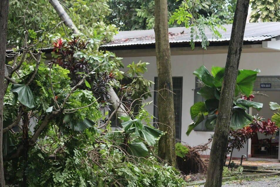Tượng Đức Mẹ Học viện Dòng Tên vẫn đứng vững trong cơn gió lốc