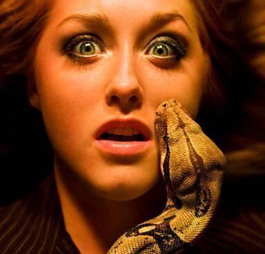 Nỗi sợ rắn và được chữa lành