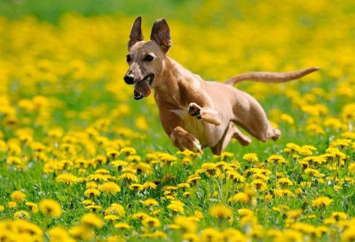 Loài chó trong Kinh Thánh