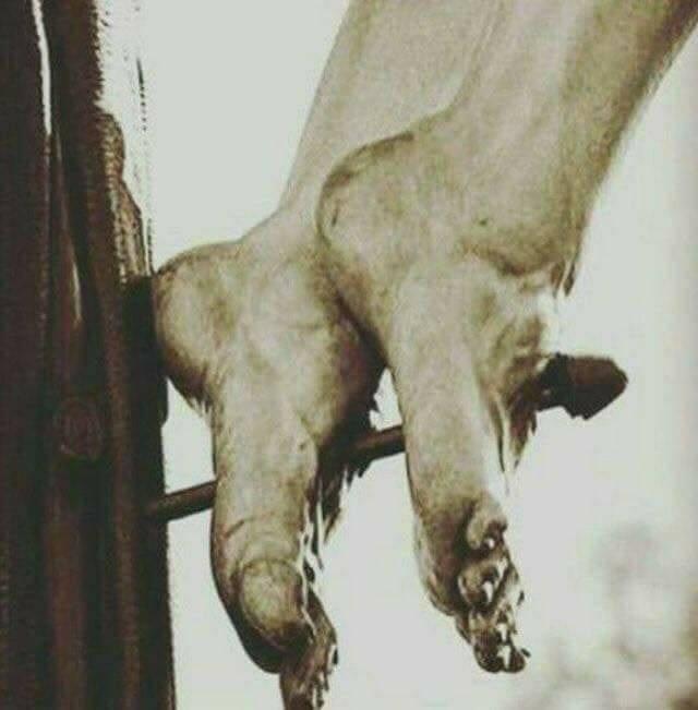 Chúng Ta Là Ai Trong Cuộc Khổ Nạn Bi Thảm Của Chúa Giêsu?